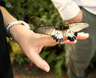 Be still!. A butterfly lands on a woman's hand Stock Photography