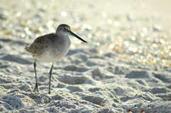 Be Still. Photograph of a seagull standing in the sand at the seashore Stock Photos