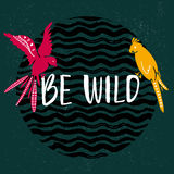 Be wild text with hand drawn parrots. Pink and yellow bird sitting on the text at dark green background  Royalty Free Stock Photos