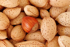 Be you. A stack of almonds and a hazelnut - standing out from the crowd Stock Photography