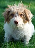 Bea's Dog Royalty Free Stock Photography