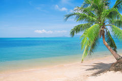 Beaautiful beach with coconut palm and sea Royalty Free Stock Image