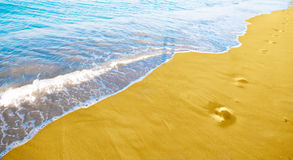 Beach. Golden beach. Beautiful nature photo Royalty Free Stock Photo