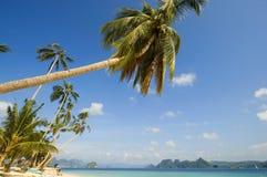 Beach. Coconut trees along beach Royalty Free Stock Photos