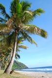 Beach. Coconut tree on grande anse beach in La Reunion island Royalty Free Stock Photos