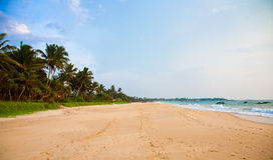 Beach. With sand, palms and ocean Stock Photos