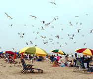 Beach. People on the beach Stock Photography