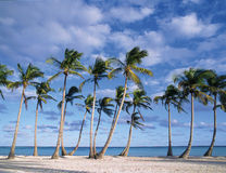 Beach. Punta cana, dominican republic stock photo
