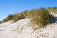Beach. Sandy California beach with grass Royalty Free Stock Images