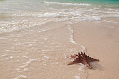 Beach. Photo of a starfish on the beach Royalty Free Stock Image