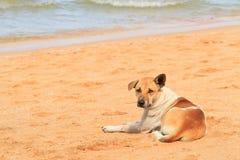 Beach. A Dog see around at Beach stock photo