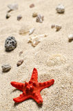 At the beach. Starfish and shells on a sandy beach Stock Images
