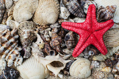 At the beach. Starfish and shells on a sandy beach Royalty Free Stock Image