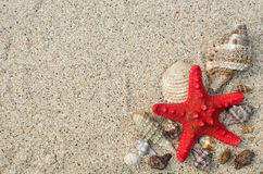 At the beach. Starfish and shells on a sandy beach with a copy space Royalty Free Stock Images