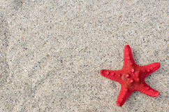 At the beach. Starfish on a sandy beach with a copy space Stock Image