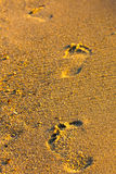 On the beach. Footprints in the sand lit by morning sun Royalty Free Stock Photos