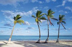 Beach. Punta Cana, Dominican Republic Stock Image