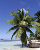 Beach. Saona island, Dominican Republic Royalty Free Stock Photo