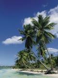 Beach. Saona island, Dominican Republic Stock Photos