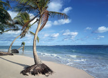 Beach. Punta Cana, Dominican Republic royalty free stock photo