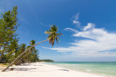 Beach. Coconut tree on the beach in Thailand Stock Photography