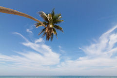 Beach. Coconut tree on the beach in Thailand Stock Images