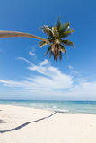 Beach. Coconut tree on the beach in Thailand Royalty Free Stock Images