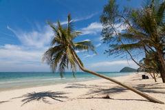 Beach. Coconut tree on the beach in Thailand Royalty Free Stock Photography