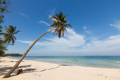 Beach. Coconut tree on the beach in Thailand Stock Photo