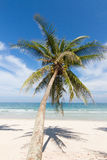 Beach. Coconut tree on the beach in Thailand Stock Image