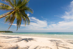 Beach. Coconut tree on the beach in Thailand Royalty Free Stock Photo