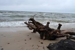 Beach. Beautiful beach in northern Poland Stock Photo