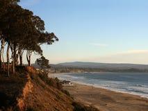 Beach. And pine trees in Santa Cruz, California Royalty Free Stock Images
