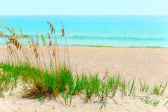 Beach. Sand dunes and sea oats on the beach Royalty Free Stock Image