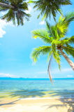 Beach. View of nice tropical empty sandy beach with some palm royalty free stock images