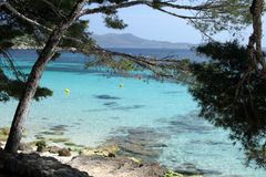 The beach. Sand beach with pine trees in a north of Majorca in Spain royalty free stock image