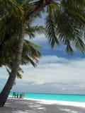 Beach. Coastline ocean sand palm sky Royalty Free Stock Image
