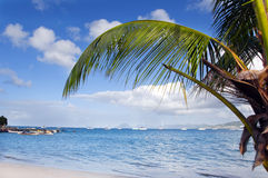 Beach. Palm tree on a beach in Martinique Royalty Free Stock Photo