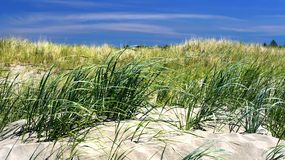 Beach. Sand dunes with wind blowing the grass at the beach stock photo
