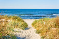 Beach access. Pathway to the baltic sea with marram grass aside Royalty Free Stock Photos