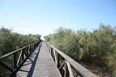 Beach access, southern Spain. Wooden pathway leading to beach in southern Spain Stock Image