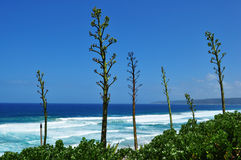 Beach and Agave Plants Royalty Free Stock Photography