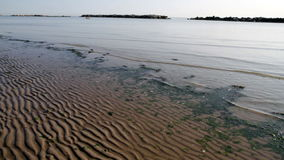 Beach with algae and low tide stock footage