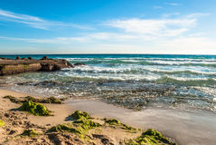 Beach with algas on a coast in Majorca on a stormy day Royalty Free Stock Photo