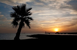 Beach in Almeria. Sunset in Almeria (south-east coast of Spain) with the silhouette of a palmtree in the foreground and of a lighthouse in the background Stock Image