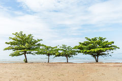 Beach almond tree Stock Photo