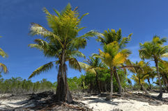 Beach along Isla Catalina, Dominican Republic Royalty Free Stock Photo