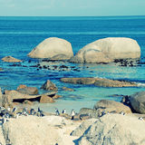 Beach of Atlantic Ocean (South Africa) with african penguins Stock Image