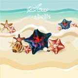 Beach background with  starfishes and shells Royalty Free Stock Photos