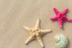 Beach background top view sea shells stars Royalty Free Stock Photography